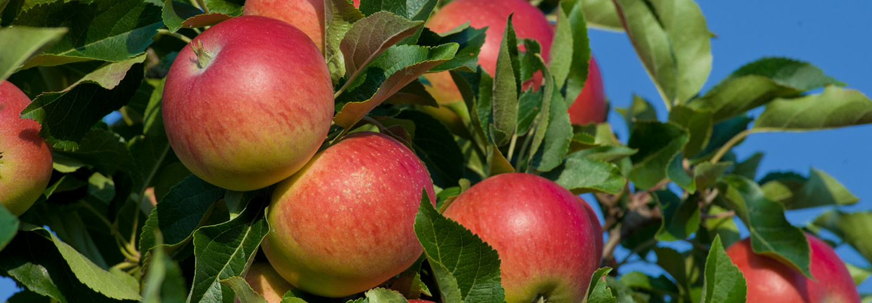 Svenska äpplen från Martin & Servera