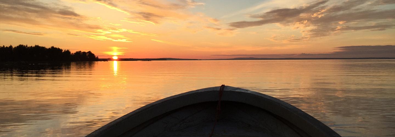 Kalix Löjrom - Årets fiskepremiär