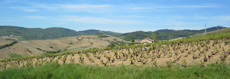 Beaujolais - ett mångsidigt vin