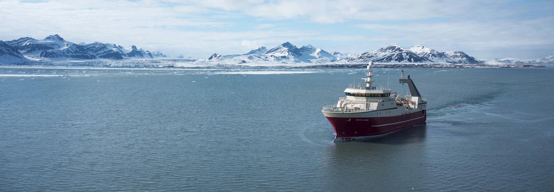 Norska kallvattensräkor – den renaste smaken från havet