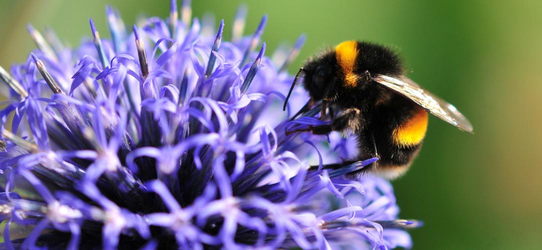 Vi vill se ökat stöd för ekologiskt och biologisk mångfald