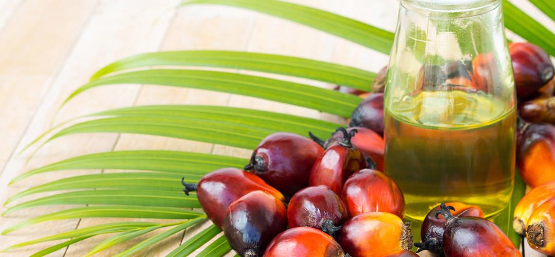 Policy palmolja